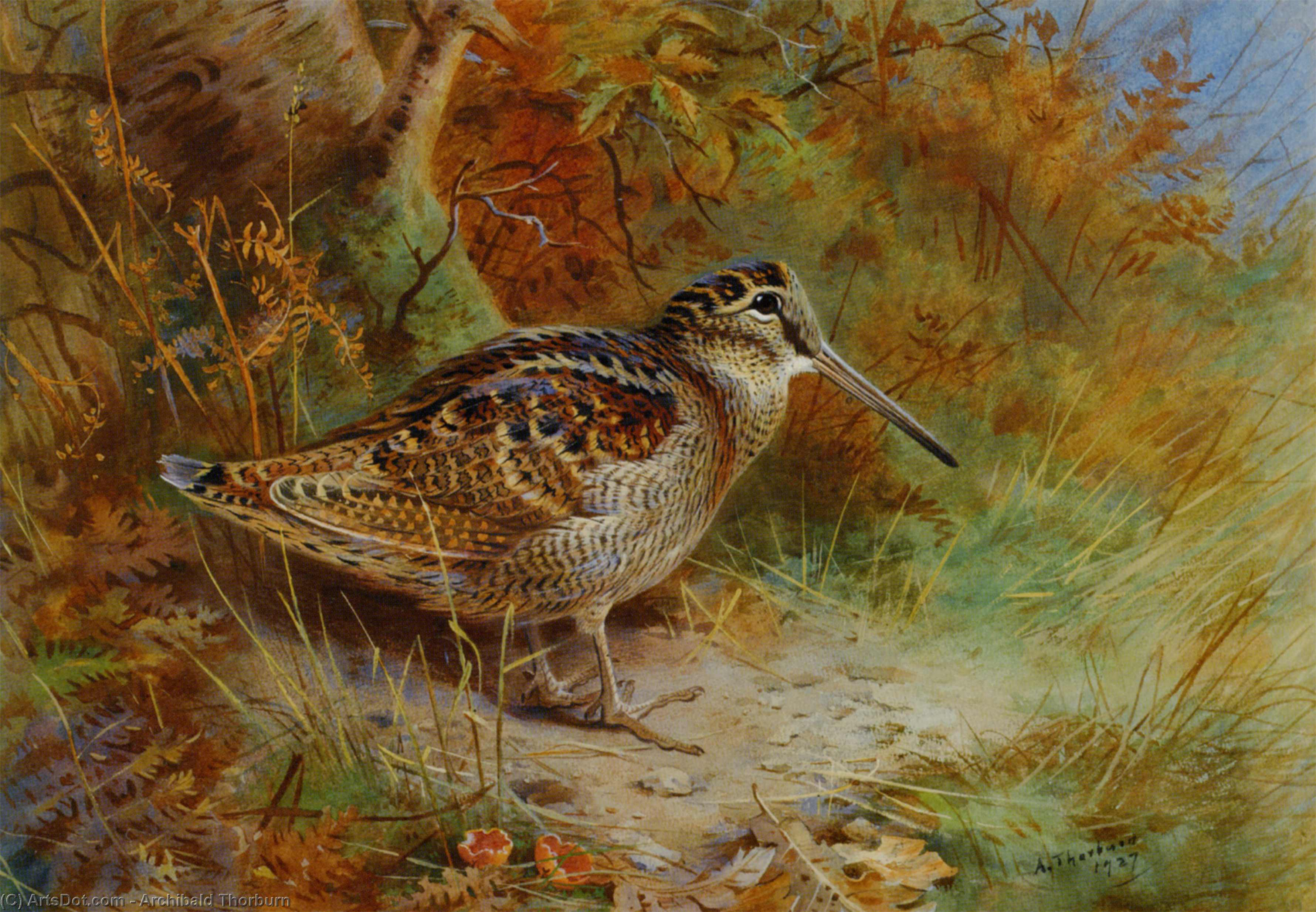 Вудкок, акварель по Archibald Thorburn (1860-1935, United Kingdom)