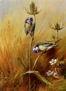 Archibald Thorburn - Bluetits On A ворсянка