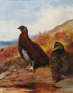Archibald Thorburn - пара красных grouse на Water's..
