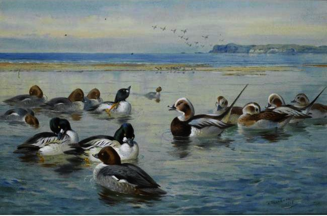 Гоголи И Longtails по Archibald Thorburn (1860-1935, United Kingdom)