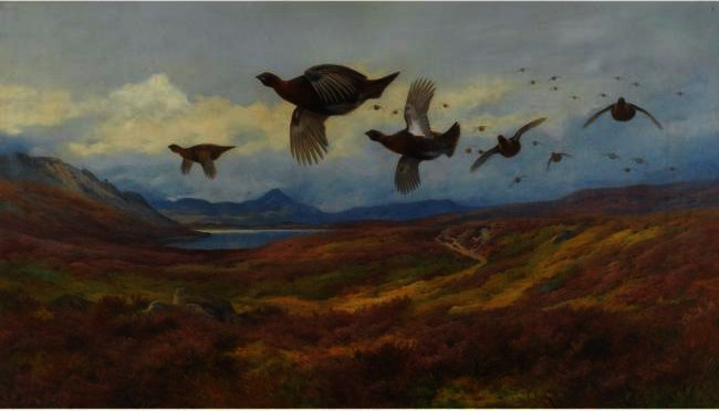 Виляние из пушек-Red Grouse, акварель по Archibald Thorburn (1860-1935, United Kingdom)