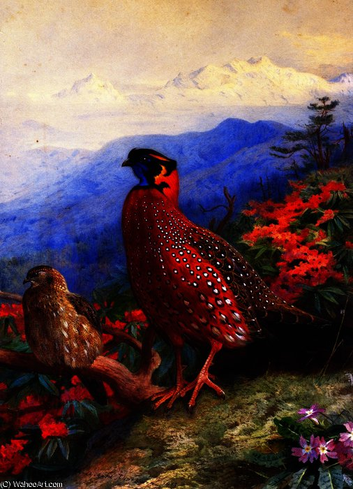Пара Сатир Tragopans, 1912 по Archibald Thorburn (1860-1935, United Kingdom)