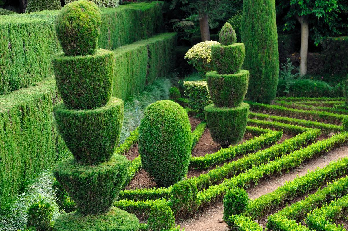 этом стрижка растений в саду фото закрепления рисунка необходимо